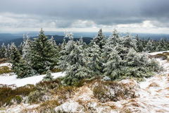 Ajardine com as árvores na área de Harz, Alemanha Fotografia de Stock
