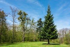 Ajardine com as árvores na área de Harz, Alemanha Imagem de Stock Royalty Free