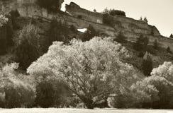 Ajardine com as árvores na flor e as rochas em Soria, Espanha Foto de Stock