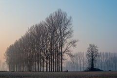 Ajardine com as árvores no amanhecer com a geada durante a estação do inverno Imagens de Stock Royalty Free