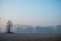 Ajardine com as árvores no amanhecer com a geada durante a estação do inverno Fotos de Stock Royalty Free