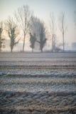 Ajardine com as árvores no amanhecer com a geada durante a estação do inverno Fotografia de Stock