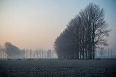 Ajardine com as árvores no amanhecer com a geada durante a estação do inverno Fotos de Stock