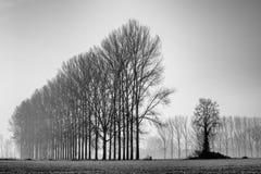 Ajardine com as árvores no amanhecer com a geada durante a estação do inverno Imagem de Stock