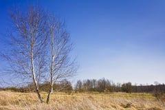 Ajardine com as árvores no fundo do céu azul sereno Imagem de Stock Royalty Free