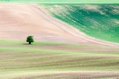 Ajardine com as curvas de campos textured ondulados e da árvore pequena Foto de Stock Royalty Free