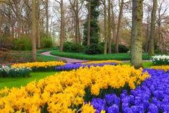 Ajardine com as flores de florescência bonitas no parque famoso de Keukenhof Imagens de Stock