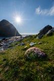 Ajardine com as flores no primeiro plano e as montanhas no fundo Imagem de Stock Royalty Free