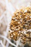 Ajardine com as folhas de outono da cor e luz completas do sol do outono, com referência a Imagens de Stock Royalty Free