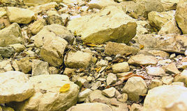 Ajardine com as grandes e pedras pequenas cobertas com as folhas caídas Imagens de Stock Royalty Free