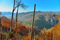 Ajardine com as montanhas e as árvores quebradas pela tempestade no outono Fotografia de Stock Royalty Free