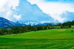 Ajardine com as montanhas no fundo com céu bonito Foto de Stock