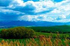 Ajardine com as montanhas no fundo com céu bonito Imagens de Stock