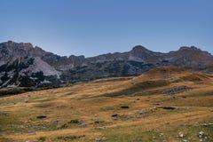 Ajardine com as montanhas no parque nacional Durmitor, Monteneg Imagens de Stock