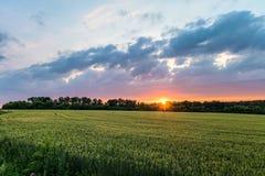 Ajardine com as orelhas de amadurecimento verdes do campo de trigo sob o céu nebuloso no por do sol Fotos de Stock