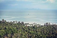 Ajardine com as palmeiras na praia no mar tropical Imagens de Stock