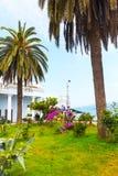 Ajardine com as palmeiras recurso em Batumi, o Mar Negro do verão de Georgiam Fotografia de Stock