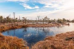 Ajardine com as plantas congeladas e a manhã gelado da hoar-geada no pântano aumentado Imagens de Stock