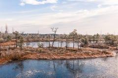 Ajardine com as plantas congeladas e a manhã gelado da hoar-geada no pântano aumentado Foto de Stock Royalty Free