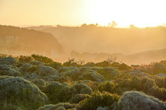 Ajardine com as plantas nativas perto da grande estrada do oceano Foto de Stock