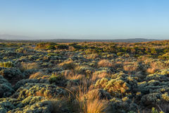 Ajardine com as plantas nativas perto da grande estrada do oceano Imagens de Stock