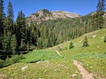Ajardine com céu azul e árvores em Colorado Foto de Stock