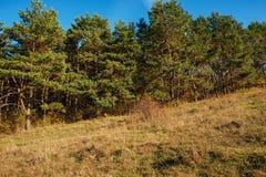 Ajardine com céu azul e madeira do outono com árvores e escove em cima do monte da pastagem Imagem de Stock Royalty Free