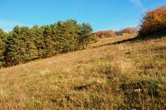 Ajardine com céu azul e madeira do outono com árvores e escove em cima do monte da pastagem Fotos de Stock