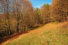 Ajardine com céu azul e madeira do outono com árvores e escove em cima do monte da pastagem Foto de Stock Royalty Free