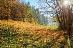 Ajardine com céu azul e madeira do outono com árvores e escove em cima do monte da pastagem Fotografia de Stock