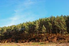 Ajardine com céu azul e madeira do outono com árvores e escove em cima do monte da pastagem Imagens de Stock Royalty Free