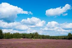 Ajardine com céu azul, nuvens, árvores e e prado do heide Imagens de Stock