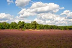 Ajardine com céu azul, nuvens, árvores e e prado do heide Imagem de Stock