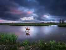 Ajardine com céu dramático, nuvens coloridas, canal de água em s Fotografia de Stock