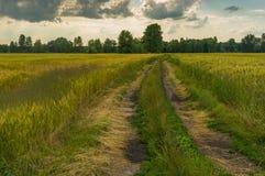 Ajardine com céu e a estrada dramáticos entre campos de trigo na temporada de verão em Ucrânia central Imagem de Stock