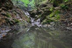 Ajardine com a cachoeira pequena no córrego de Borzesti que vai acima ao desfiladeiro de Borzesti Fotos de Stock Royalty Free