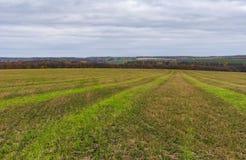 Ajardine com campo de cereais colhido no oblast de Sumskaya, Ucrânia Imagens de Stock Royalty Free