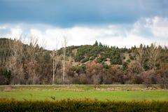 Ajardine com campo de grama verde, árvores no monte sob o céu azul Imagens de Stock Royalty Free