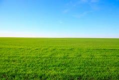 Ajardine com campo de grama verde e o céu azul Imagens de Stock