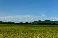 Ajardine com campo de grama verde e o céu azul Imagens de Stock Royalty Free