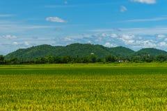 Ajardine com campo de grama verde e o céu azul Fotos de Stock Royalty Free