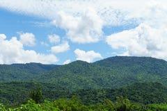 Ajardine com campo de grama verde e o céu azul Foto de Stock