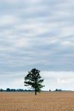Ajardine com campo de trigo e árvore só e floresta no fundo Imagens de Stock