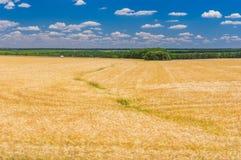 Ajardine com campo de trigo maduro e o céu azul, nebuloso em Ucrânia central Fotos de Stock Royalty Free