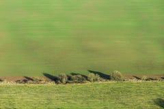 Ajardine com campo e as árvores verdes na harmonia Imagens de Stock
