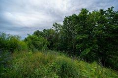 Ajardine com campo, floresta e o céu nebuloso Imagem de Stock Royalty Free