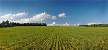 Ajardine com campo. Panorama. Fotografia de Stock Royalty Free