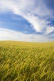 Ajardine com campo rural e o céu bonito Fotografia de Stock