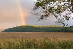 Ajardine com campo selvagem, o céu dramático e o arco-íris Imagem de Stock