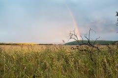 Ajardine com campo selvagem, o céu dramático e o arco-íris Imagens de Stock Royalty Free